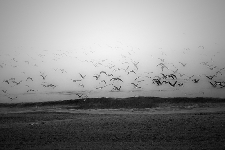 gulls_in_a_fog