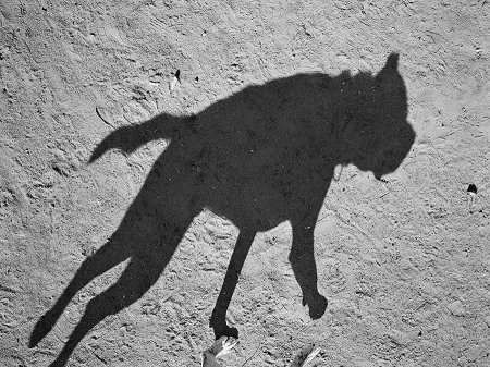 dogshadow8.jpg