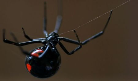 Police-officer-wears-full-riot-gear-to-exterminate-black-widow-spider-356911.jpg